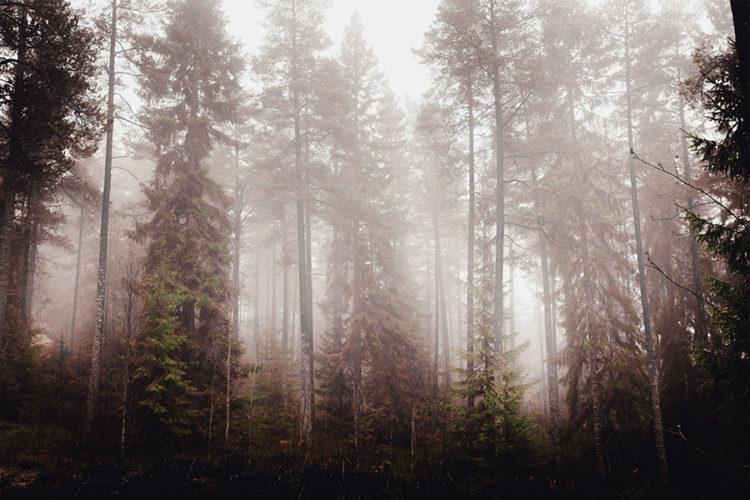 fogilicious_mornings