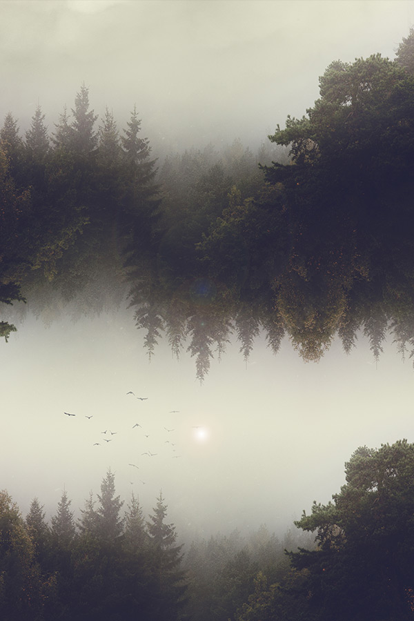 forest_dreams