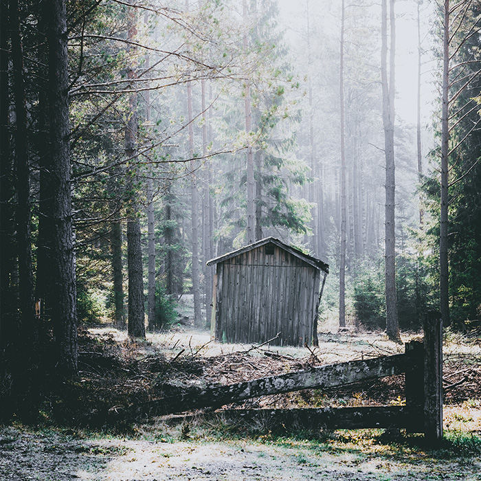 front_forest_cabin