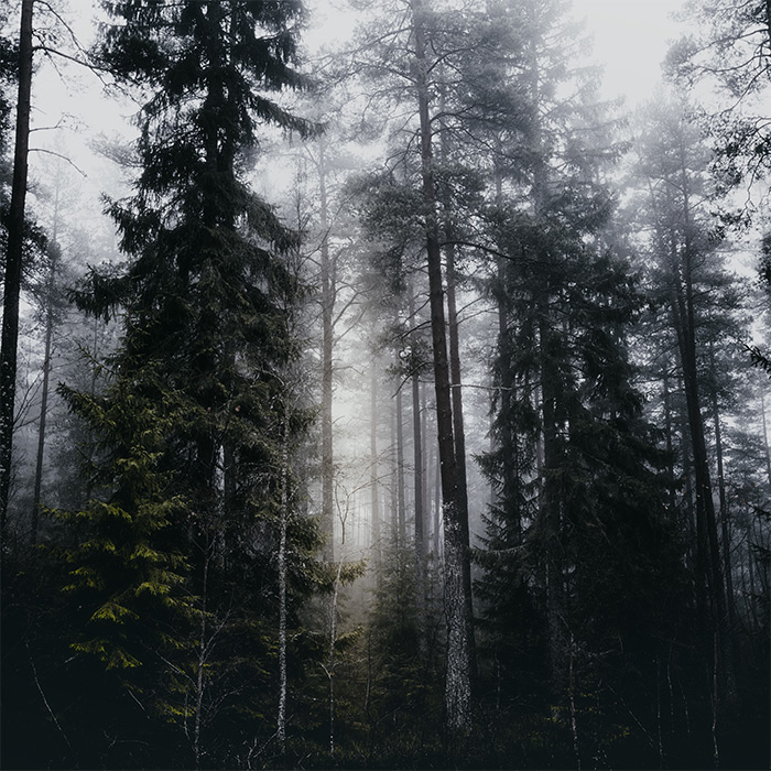 into_the_forest_We_go