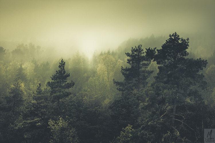 web_forestsneversleep
