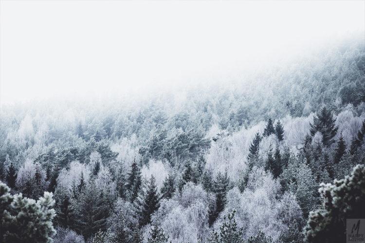 web_frozenhearts