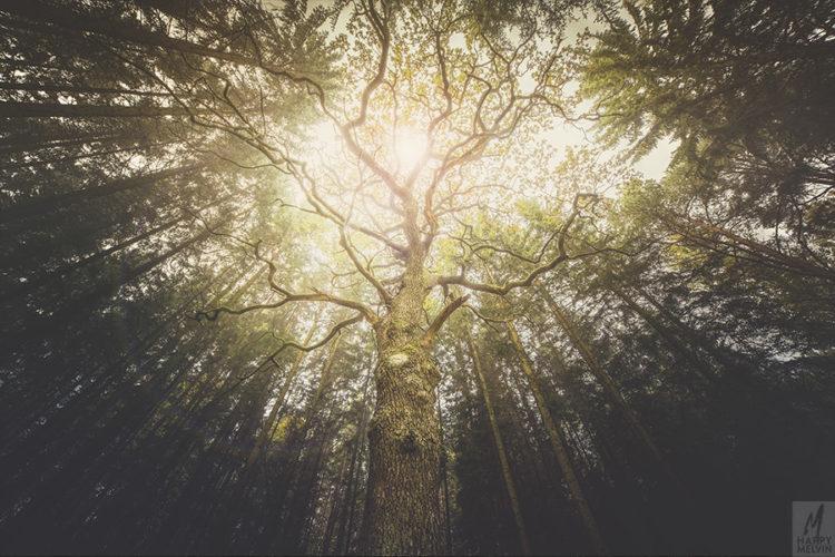 web_ifoundatreeintheforest