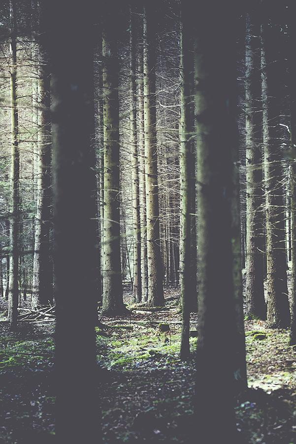 forest_feelings