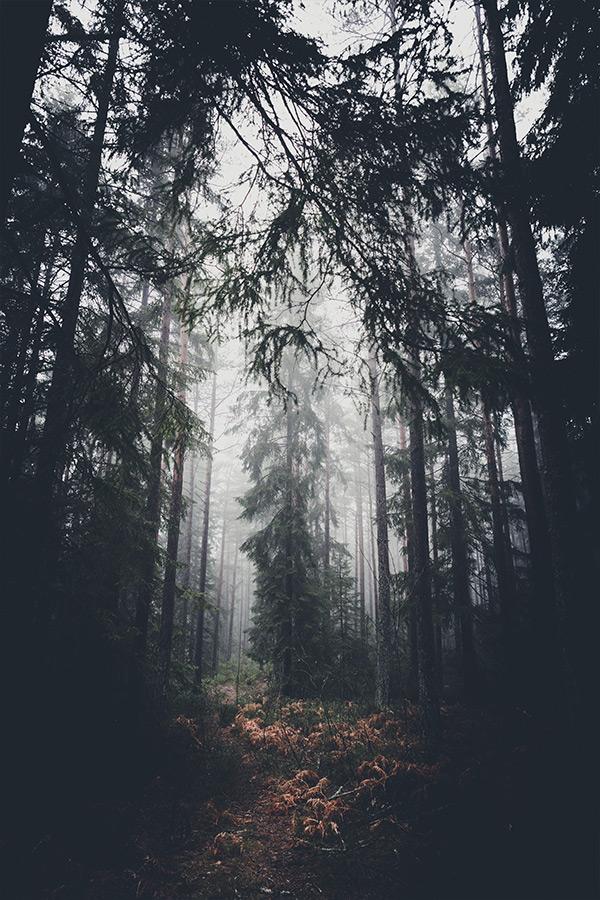 dark_paths