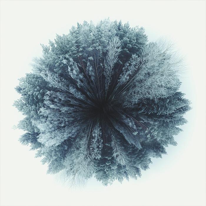 forest_world