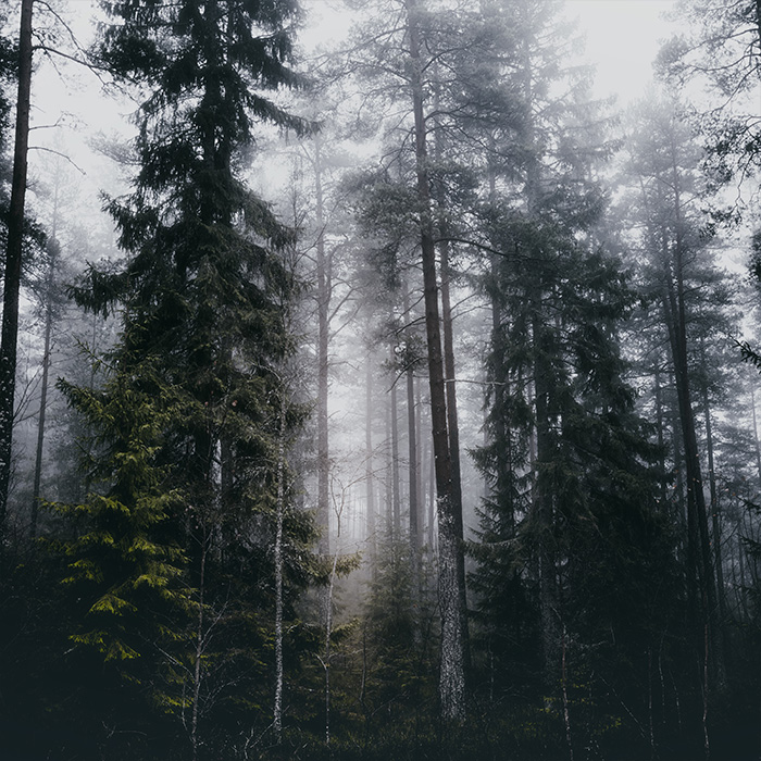 front_square_foggy_forest