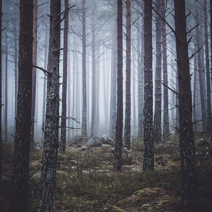 front_square_foggy_forest2