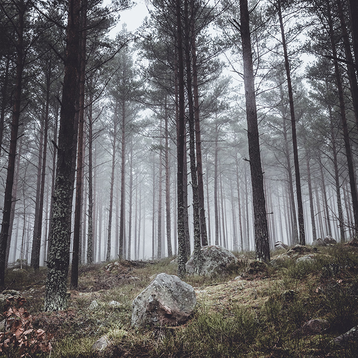 front_square_forest