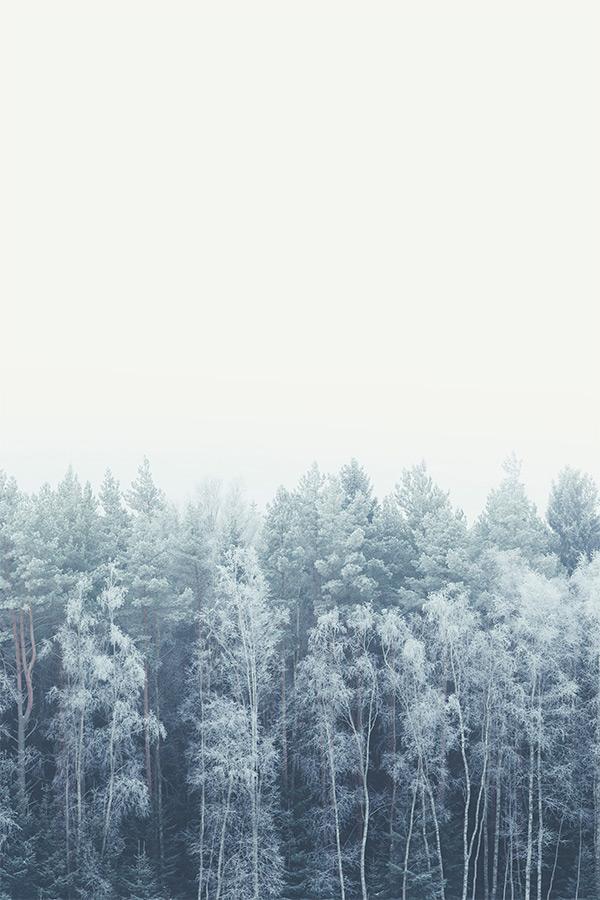 frosty_feelings