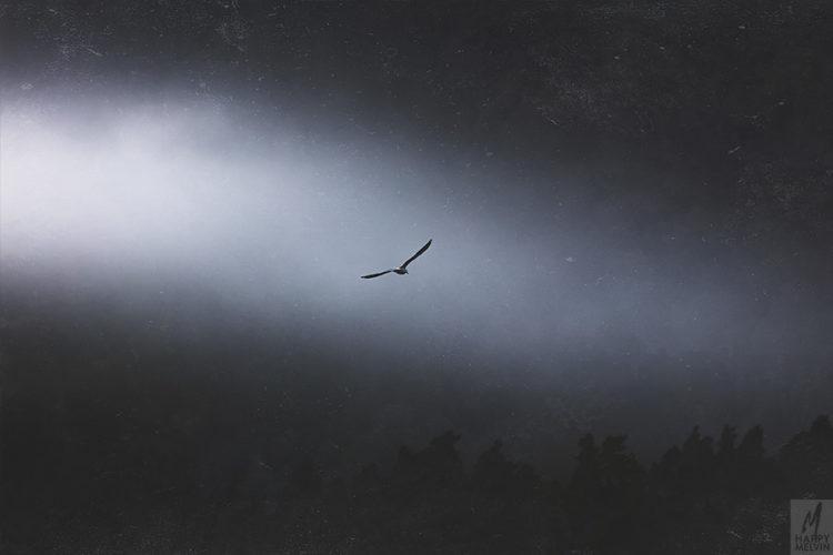 web_flyaway2