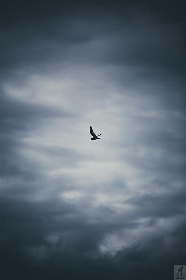 web_flyinghigh