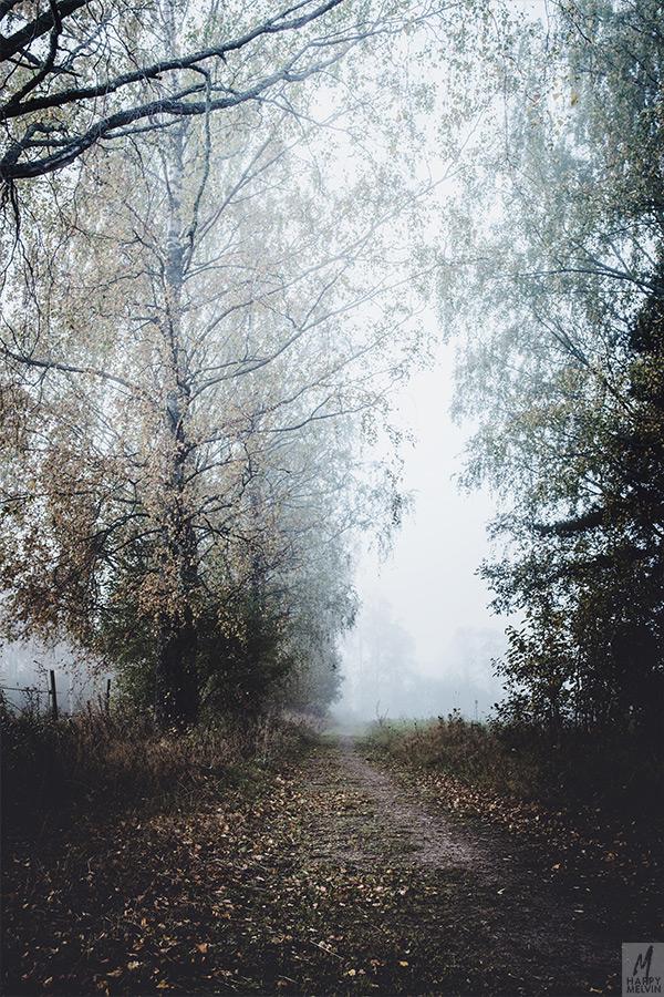 web_foggywalks1